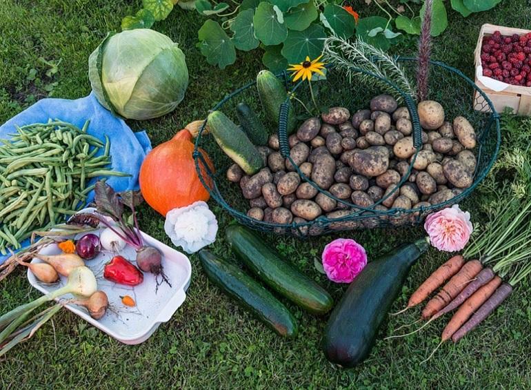 Vendita semi on line vendita piante online vendita sementi for Vendita piante orto