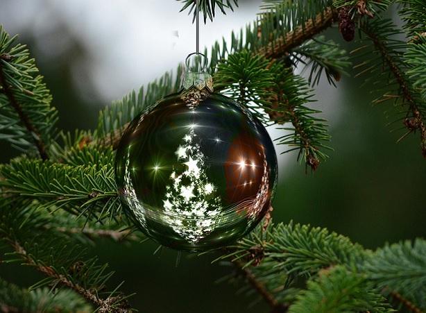 albero di natale, abeti, alberi, pini, natalizi