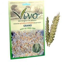 GERMOGLI - GRANO (frumento) -
