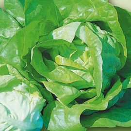 LETTUCE JUSTINE - IN PILLS UNISEM (one seed/pill)
