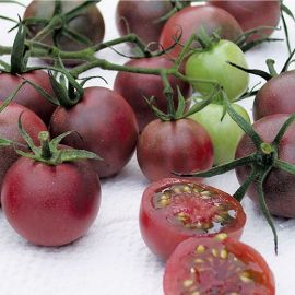 TOMATO -Black Cherry-