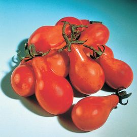 TOMATO - RED  PEAR -