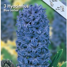 GIACINTO -BLUE JACKET-