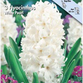 GIACINTO - WHITE PEARL