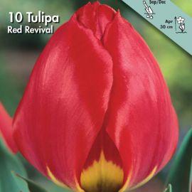 TULIPANO SEMPLICE PRECOCE -RED REVIVAL-