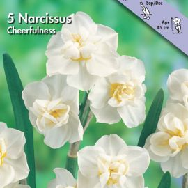 NARCISO POETAZ -CHEERFULNESS-