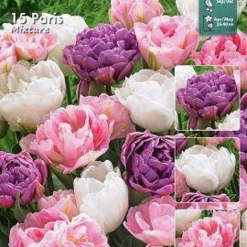 PARIS -Tulipani in miscuglio