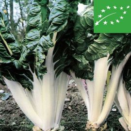 SWISS CHARD - VERDE A COSTA LARGA ARGENTATA - organic