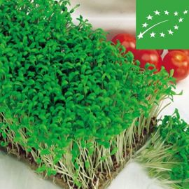 GARDEN CRESS (Lepidium sativum) -organic