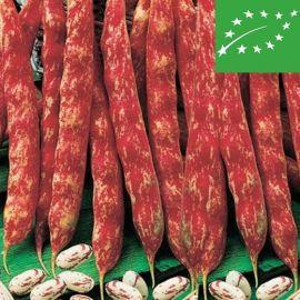 BUSH SHELL BEAN  - BORLOTTO LINGUA DI FUOCO - organic
