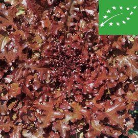 LOOSE-LEAF LETTUCE  - BISCIA ROSSA - organic