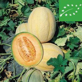 CANTALOUPE (melon) - RETATO DEGLI ORTOLANI - organic