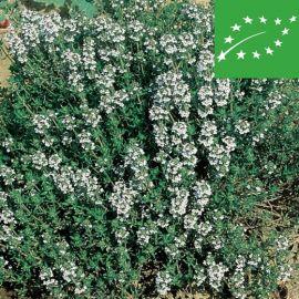 THYME ORGANIC (Thymus vulgaris)
