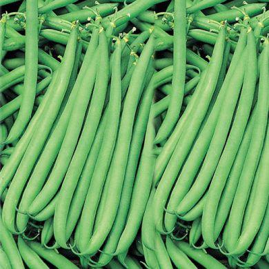 BUSH BEAN- CLARION  NANO - (EX ALLURE)