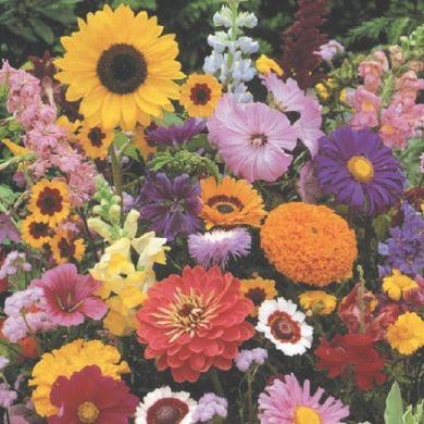 HIGH SUMMER FLOWER MIX