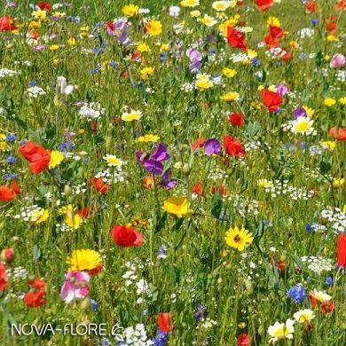 FLOWER MEADOW MIX - FIESTA -