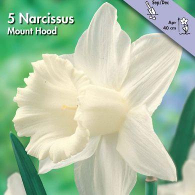 NARCISO A TROMBETTA -MOUNT HOOD-