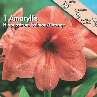 AMARILLIDE - SAUMON/ORANGE