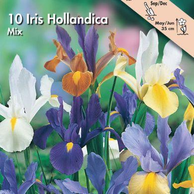 IRIS HOLLANDICA IN MISCUGLIO