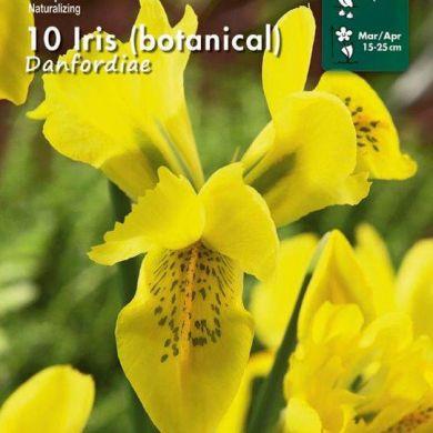 IRIS BOTANICI- DANFORDIAE-