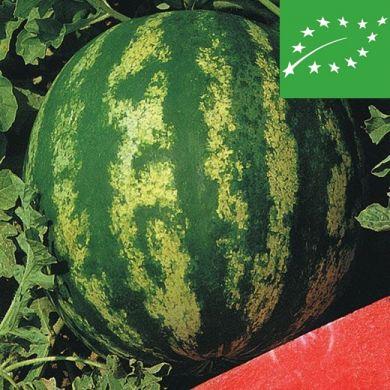 WATERMELON -CRIMSON SWEET-  organic
