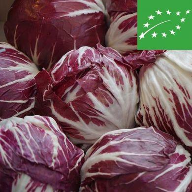 CHICORY - PALLA ROSSA 3 - organic