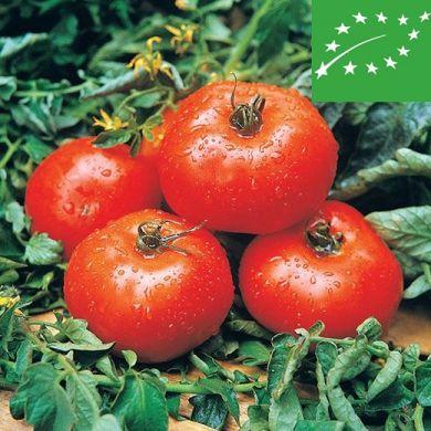TOMATO -ACE 55 VF- organic