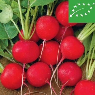 RADISH RED ROUND - SAXA 2 - organic