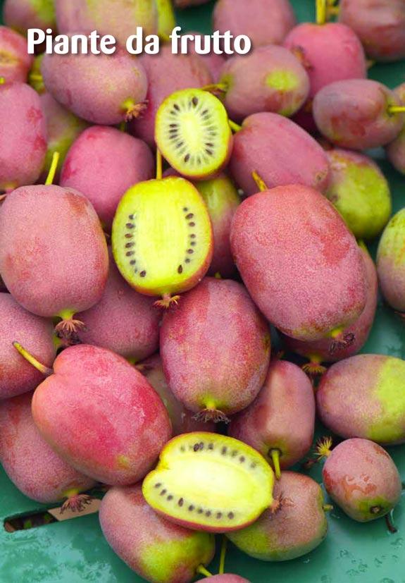 Catalogo Piante E Fiori: EXPOPLANT Vendita e acquisto online di piante arbusti rose.