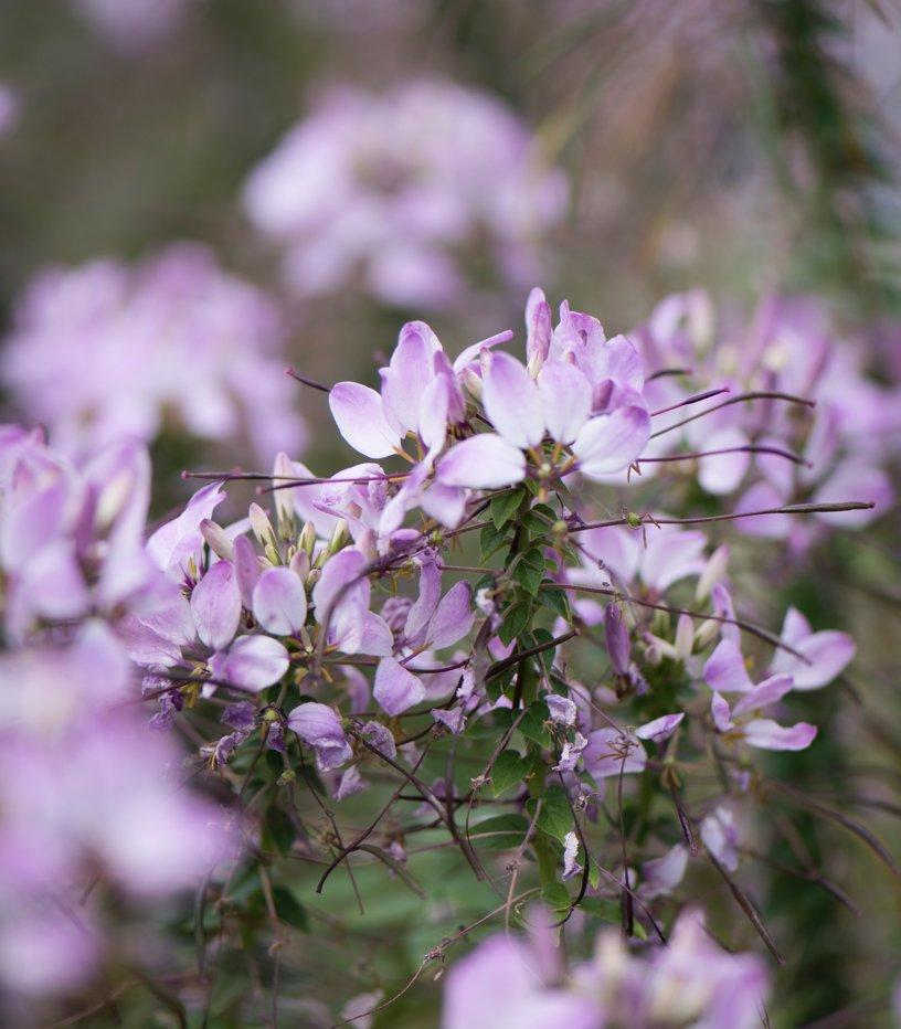 Vendita semi on line vendita piante online vendita sementi for Ingegnoli piante